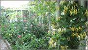 Flori si gradini - Pagina 31 IMG_1364