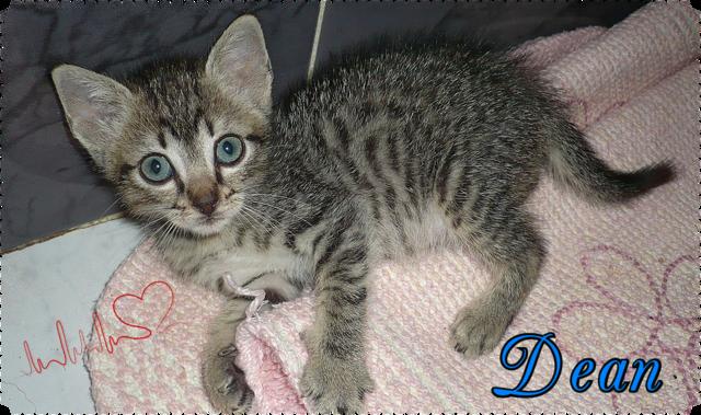Dean gatito de 2 meses busca hogar-Sevilla X_Pj_Juad