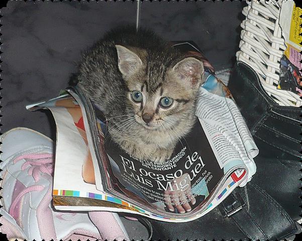 Dean gatito de 2 meses busca hogar-Sevilla 6c_PXZv2