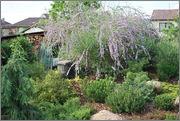 Léto na zahradě - Stránka 2 DSC_0042