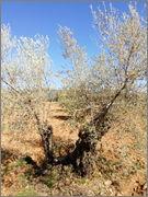 ¿Cómo incrementar el contenido en materia orgánica del suelo? 2vmvfh4