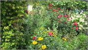 Flori si gradini - Pagina 31 IMG_1345