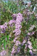 Léto na zahradě - Stránka 2 DSC_0039