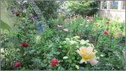 Flori si gradini - Pagina 31 IMG_1365