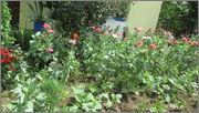 Flori si gradini - Pagina 31 IMG_1333