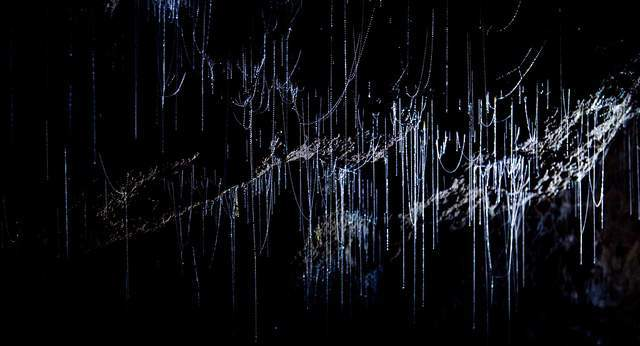 Pećine - Page 4 Glow_worm_caves_waitomo_new_zealand8