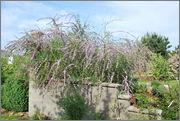 Léto na zahradě - Stránka 2 DSC_0038