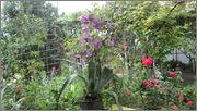 Flori si gradini - Pagina 31 IMG_1401