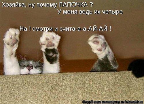 Фотографии кошек 426edfe42973