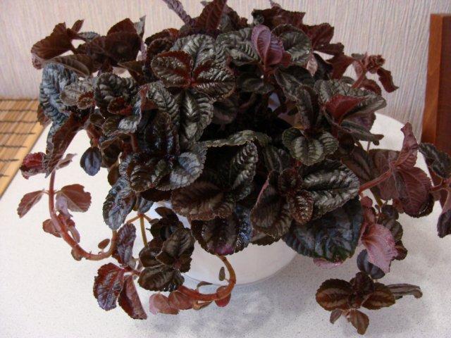 Мои цветочки - Страница 19 2b082fc8909d