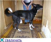 Чара - потрясающая собака! Ищет лучших хозяев! Fd39669c75fct