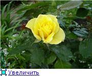 Лето в наших садах - Страница 2 Fa2864e08b8et