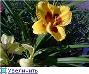 Лето в наших садах - Страница 7 F258b3d2c856t