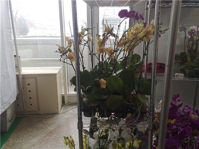 «Цветы.Ландшафт и Приусадебное хозяйство Весна - 2010» E66fea425ceb