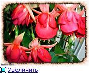 ФУКСИИ В ХАБАРОВСКЕ  - Страница 3 C0e5c7044e20t