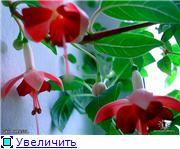 ФУКСИИ В ХАБАРОВСКЕ  - Страница 3 Fddada10117dt