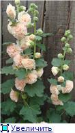Лето в наших садах - Страница 6 C3069c67b630t