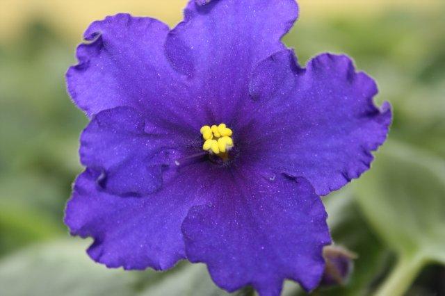 Растения от FILIGERa - Страница 12 1a6b5e5356bb