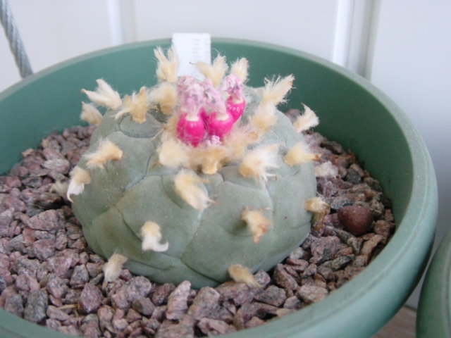 Show us  your cacti - Page 7 Ddf4945185c1