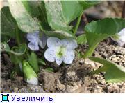 Весенне цветущие 27a4e617f790t