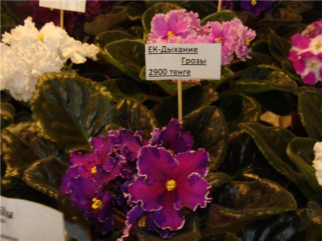 Международая выставка «Цветы.Ландшафт .Усадьба 2010» Астана - Страница 3 9bfa756f6c9e