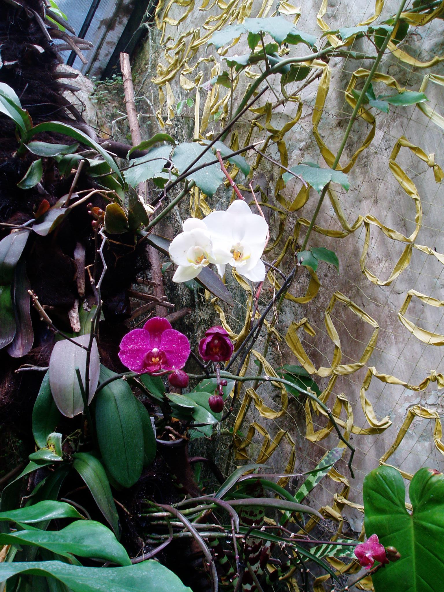 Выставка Орхидей B2589e4018db