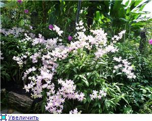 Парк орхидей в Ботаническом саду Сингапура. C95799e0aadat