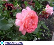 Лето в наших садах - Страница 2 87b71bc533c9t