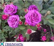 Лето в наших садах - Страница 6 C6ac26338be6t