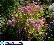 Лето в наших садах - Страница 4 Bef7b124b5b5t