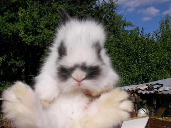 Petites lapines SANY0096