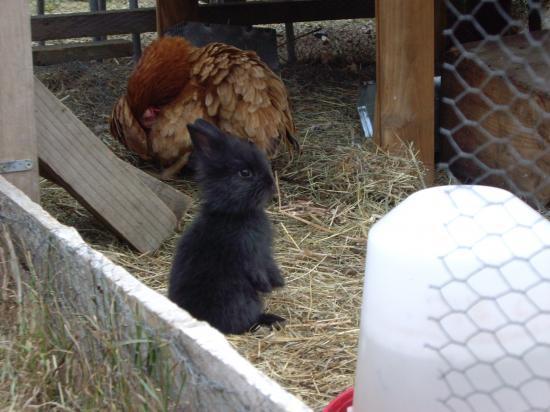 Petites lapines IMGP7997