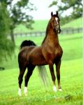 Транспортные средства: лошади, ящеры и т.д. F8d5f5b56bd63c1d8864d526f37c4e8b
