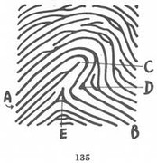X - WALT DISNEY - One of his fingerprints shows an unusual characteristic! - Page 4 Fig135