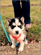 Oakley's puppy scrapbook! Photo_Dec_24_11_18_38_PM