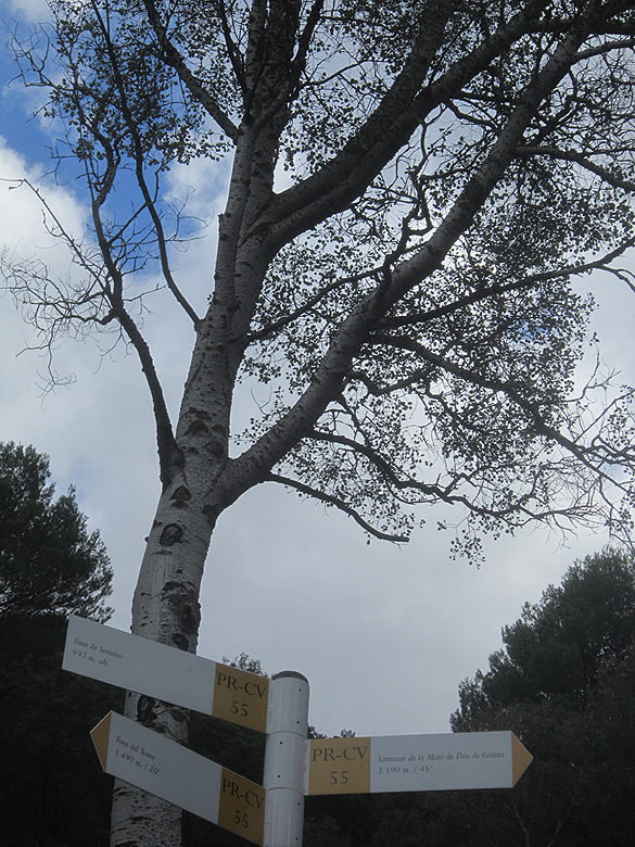 EL RECONCO,Biar + COVA NEGRA (ruta motosenderista) Biar12