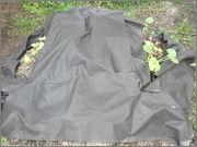 Dýně - tykve - patizony - cukety DSCF3902