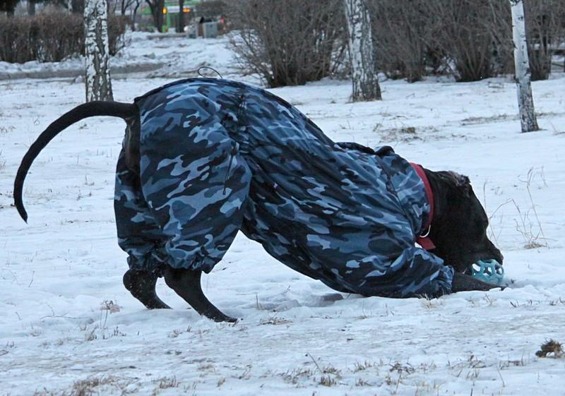 Гера, Герочка, Герасик-моя черная пантерка. - Страница 3 Image