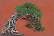 Me ha surgido una duda sobre el trasplante de árboles caducos 28814_52_a_2