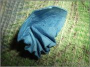 Скрапбукинг. Голубой мак, карандашница или декорваза для сухоцветов. 1_DSCF1921