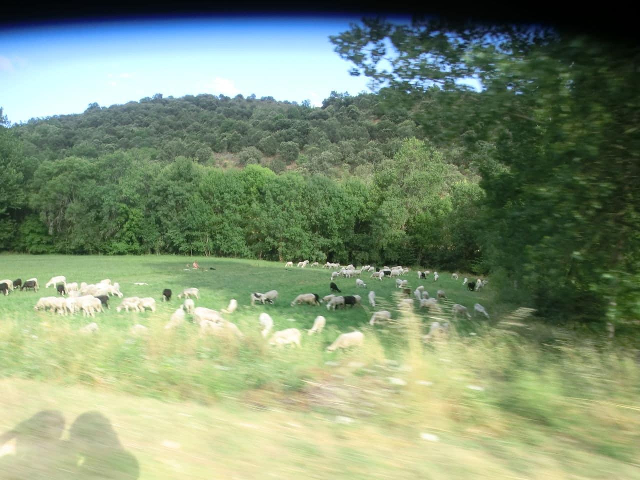 Summer roadtrip 2015 - Picos da Europa CIMG6250