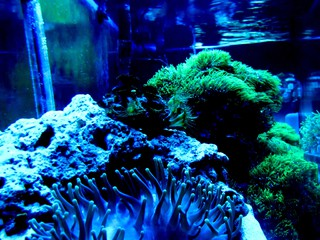 Newfoundland Coral Propagation