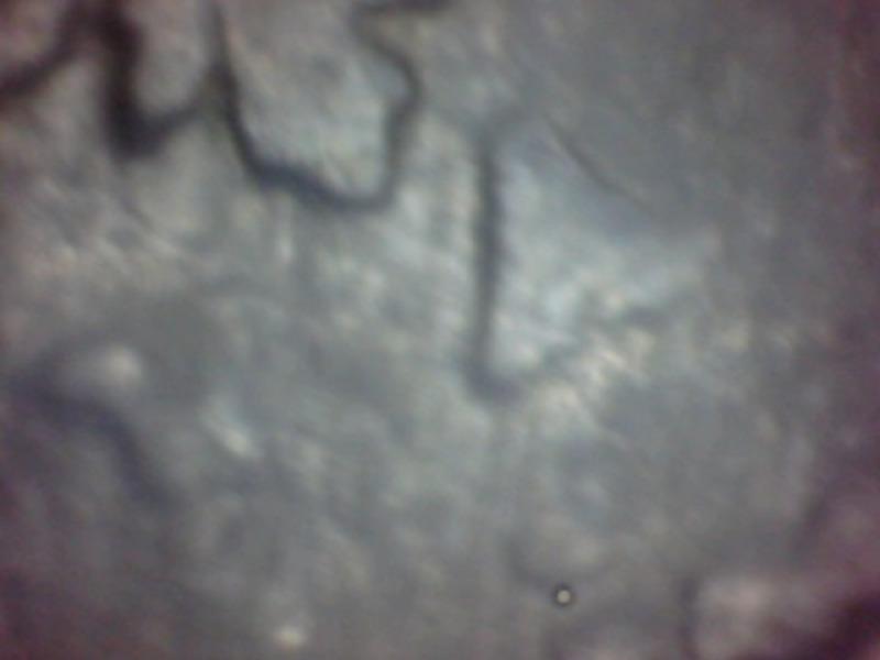8 maravedis const de fernado 7º año 1823 0310_3