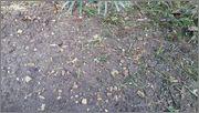 Pěstování ze semínka 20150727_081044