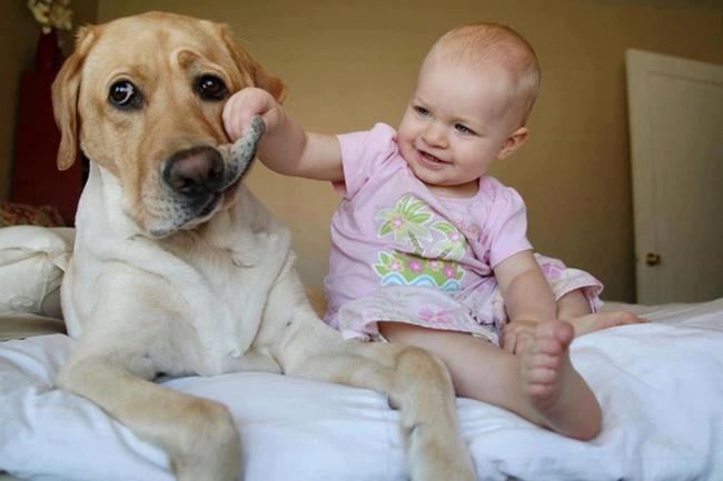 Cafeneaua vesela 8 - Pagina 6 7172460_R3_L8_T8_D_650_cute_big_dogs_and_babies_32