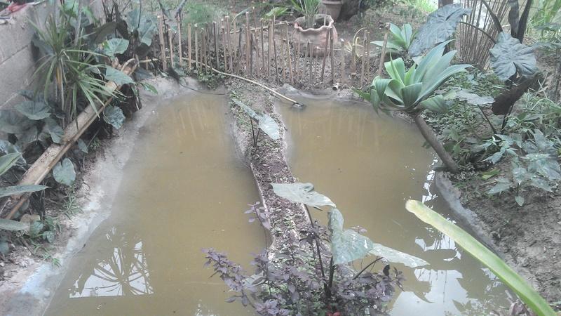 Construindo meu laguinho natural, me diga oque por nele. IMG_20140522_161937_136