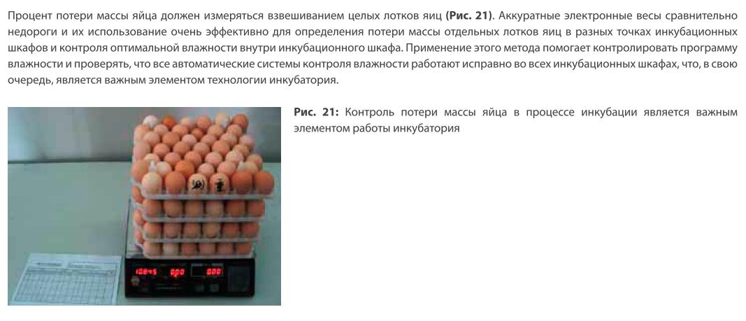 Анализ проблем выводимости яиц - Страница 5 2rhGV