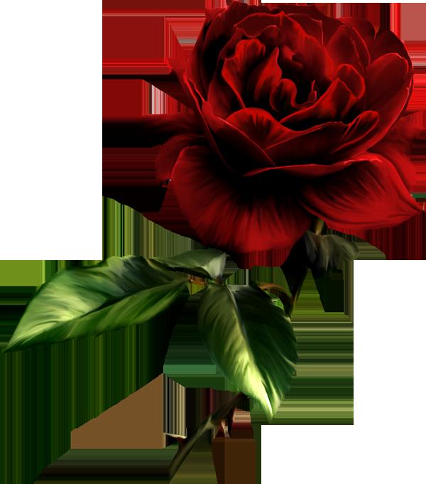 Клипарты: цветы - Страница 4 OU5n1
