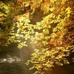 Осенние аватарки - Страница 2 M1ZNU