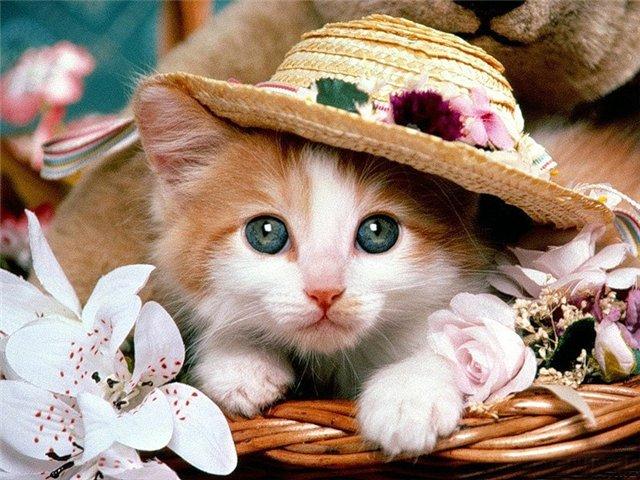 Фотографии кошек 850a19a82054